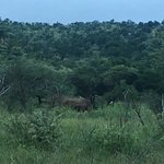 Photo of Black Rhino Game Lodge
