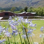 Photo of Dornier Wine Estate