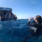 Emperor Divers El Gouna - Day Trips Foto
