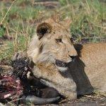 Mweya Safari Lodge Foto