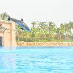 Photo of Dolphin Bay