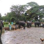 Elephants reach after bathing
