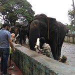 Elephants aligned for feeding