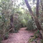 Well maintained and easy-walking pathway in Talbot Forest.