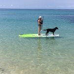 Paddle Boarding with Shadow IV