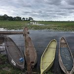 Foto de Okavango Delta
