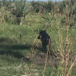 Photo de Okavango Delta