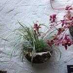 In the cozy courtyard at Metamorphosis.