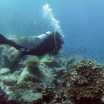 Diving with coral & fish.