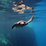 Turtle while snorkeling