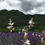 Oishi Park in July