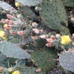 Изображение Saguaro Lake Guest Ranch