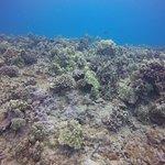 Hawaii Loa dive with beautiful coral!