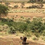 Photo of Samburu Simba Lodge