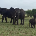 Game drives from Kuria Hills