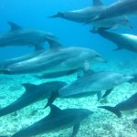 Don't be surprised when the dolphins come and say hello!