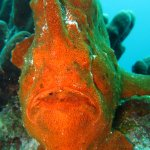 Ask your DM to show you one of the Giant Frogfish!