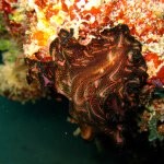 Look at the colors of this flatworm!