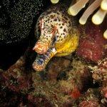 The Dragon Moray eel