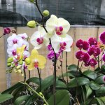 If you can't find an orchid here, there must be a problem. The choices are endless.