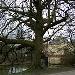 One of the large trees which lined the walking paths along the canal in front of this B&B.