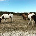Photo de Assateague Island National Seashore Campground