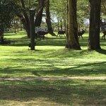 Foto di Lake Naivasha Simba Lodge