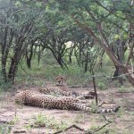 Photo de Vuyani Safari Lodge
