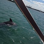 Wonderful time with Capt. Adam. We saw 10 dolphin and 3 manatees.