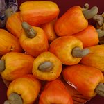 kokan cashew Nut