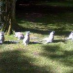 Foto di Fota Wildlife Park