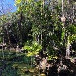 Foto de Cenote Chikin Ha