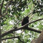 Howler Monkey during hike at Punta Sal
