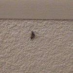 Roach I killed on the wall in the kitchen