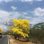 Cañaguate florecido en época de verano.