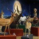 Our Juan Infante International Hall displays magnificent animals