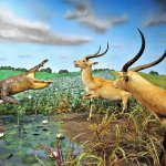 Our 6 hand painted dioramas show animals in their natural habitats.