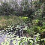 Photo de Grassy Waters Nature Preserve
