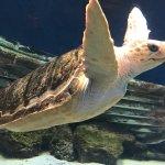 A great aquarium with information about the habitats of the sea life. Unique sea horse exhibits