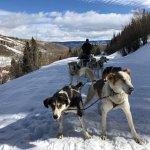 Driving the Alaskan Huskies team - Steamboat 2017