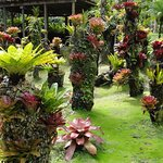 Des arbres à fleurs
