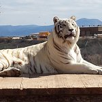 Out of Africa again- so regal!