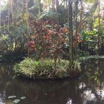Hawaii Tropical Botanical Garden Foto