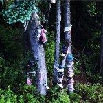 Bras tied to trees, Mount Washington Alpine Resort , 1 Strathcona Pkwy, Mount Washington, BC