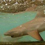 Feeding baby sharks
