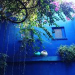 The blue wall with bougainvillea, indigo moods!