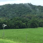 Photo of Daintree Discovery Tours