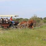 un safari en calèche en Camargue