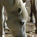 le cheval Camargue, magique