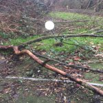 Safety risk fallen trees two months not sorted